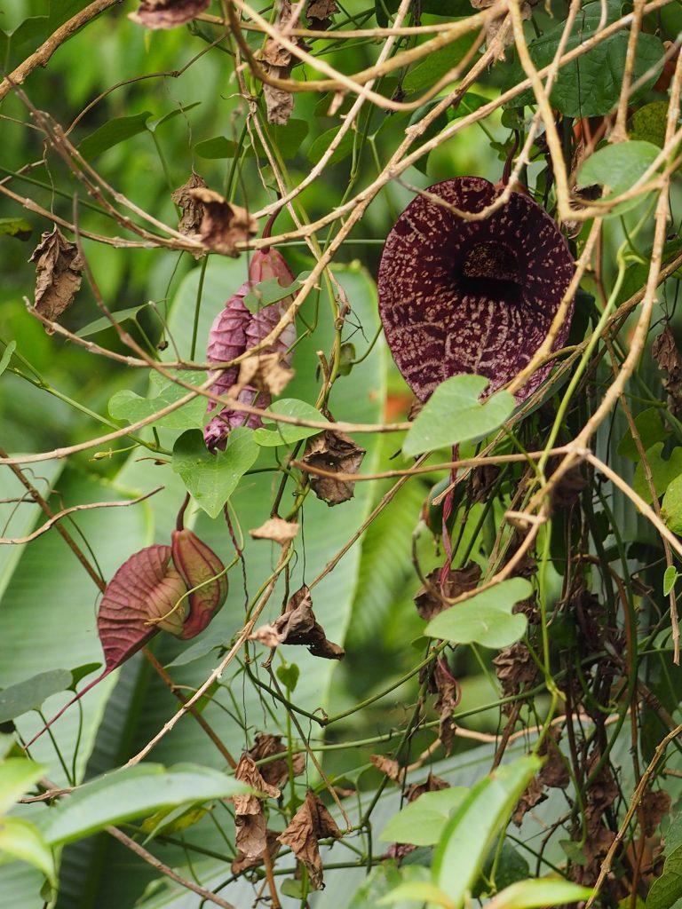 コスタリカで観察した植物
