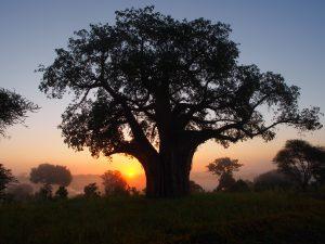 タランギーレ国立公園の夜明け