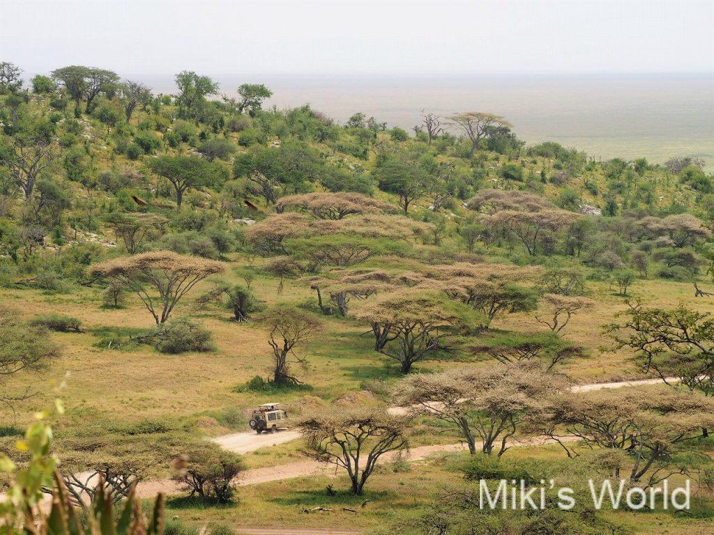 アフリカ・タンザニア セレンゲティの玄関 ナービヒルゲート