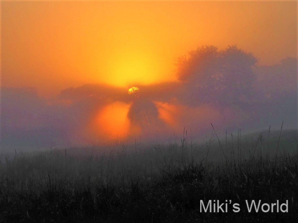 日の出と朝霧