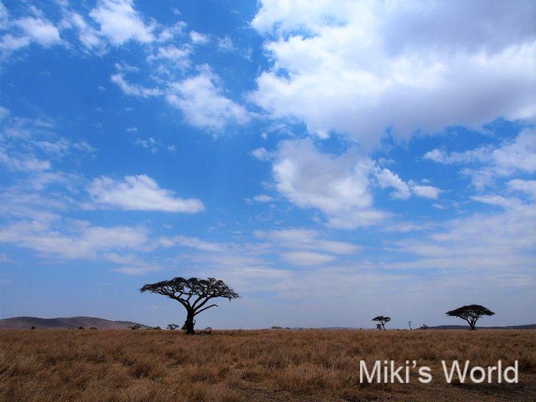 タンザニア セレンゲティ国立公園
