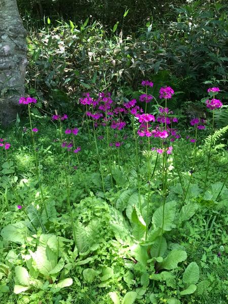 国内の稀少な植物を求める旅を作っていた私に自然に身についた事