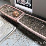 スズメの砂浴び後の惨状