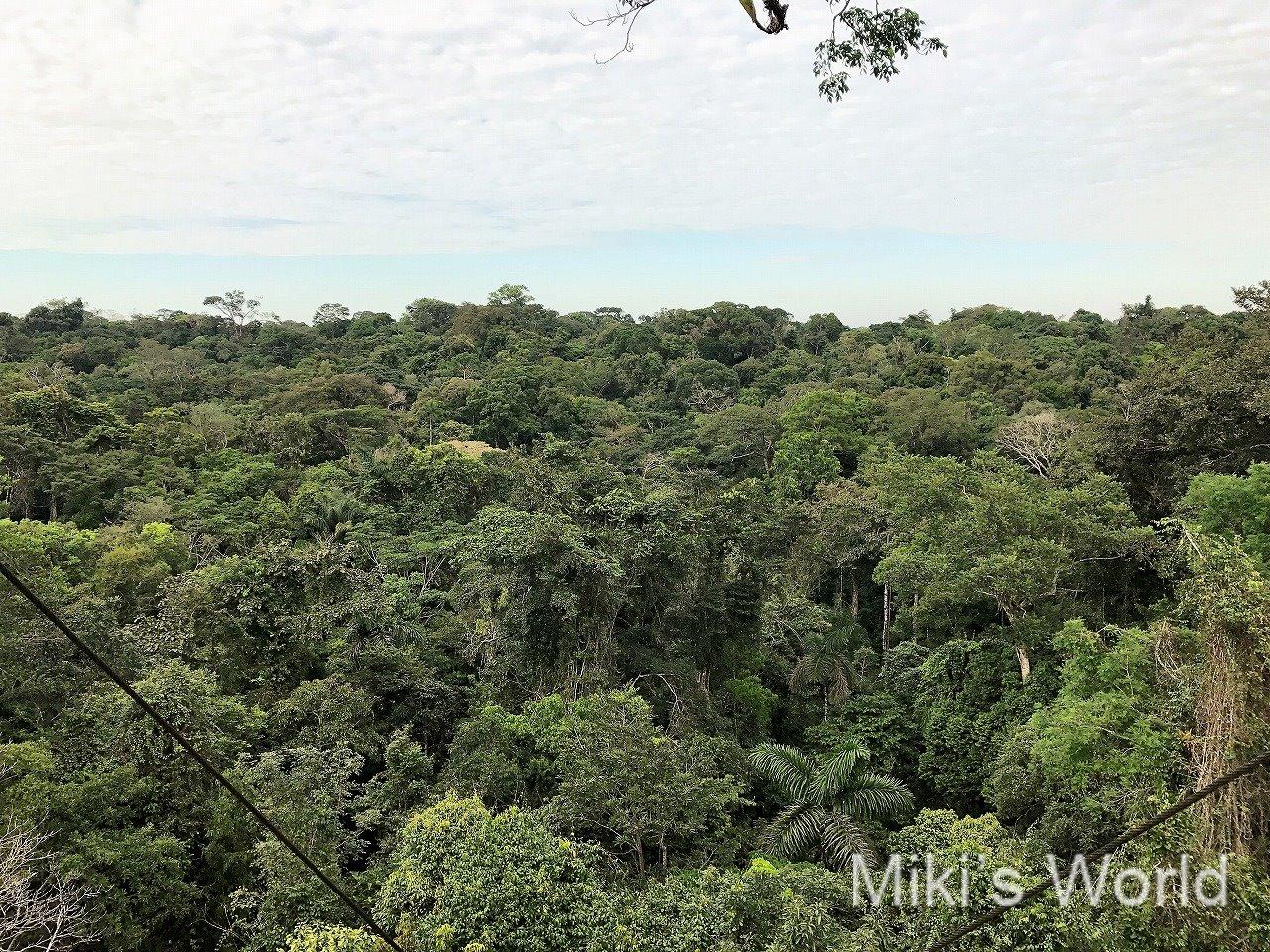 世界一のキャノピータワーからの見える森