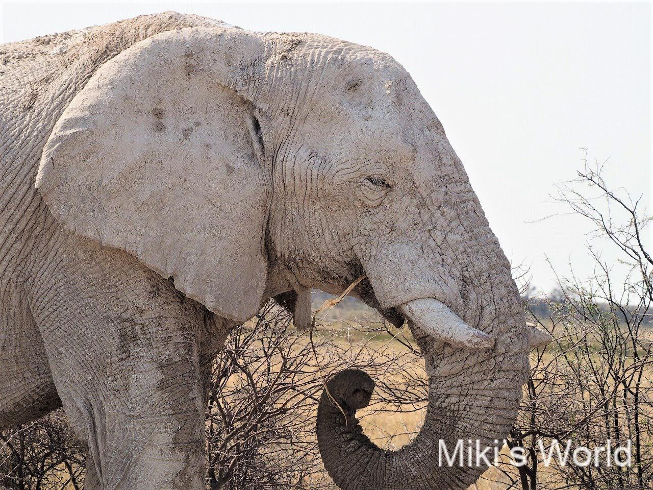 ブログ写真集 第一弾 ナミビア エトーシャ国立公園