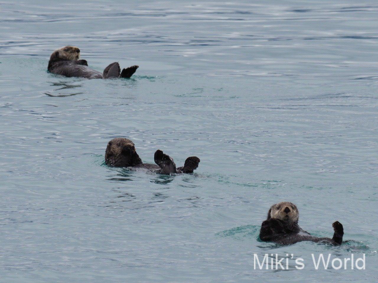 アラスカがアメリカ本土から飛び地な理由とラッコとの関係性 クルーズ船選び
