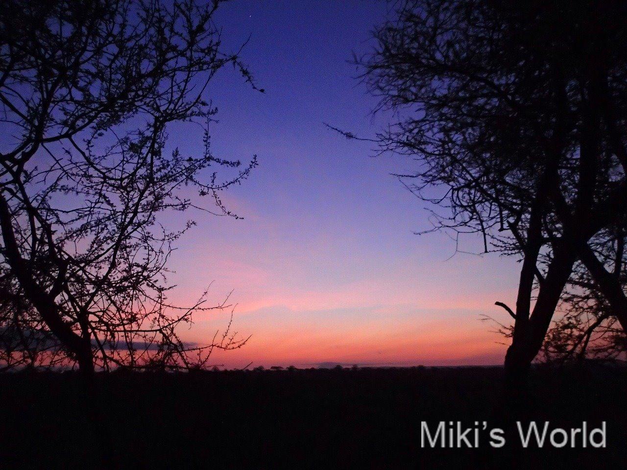 タンザニア タランギーレ国立公園 日の出の光と色の爆発がたまらない