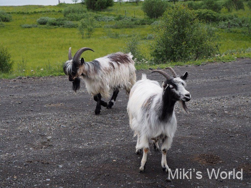 ブログ写真集 アイスランド №2
