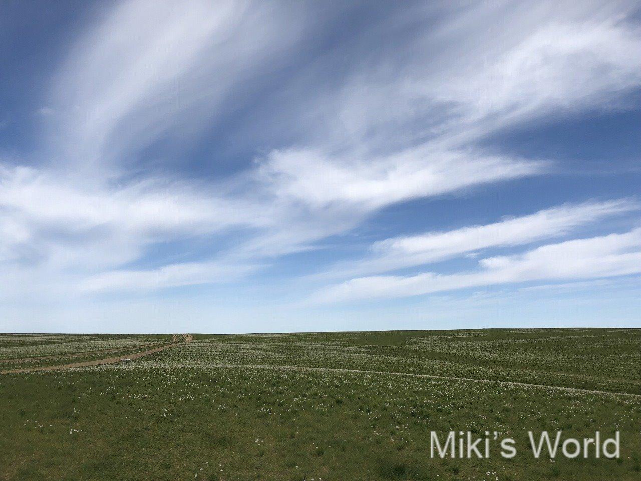 2018年 南ゴビ砂漠は緑の絨毯