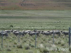 ブログ写真集 南米チリ パタゴニア パイネ国立公園 №2 動植物編