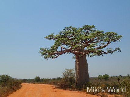 海外旅行の荷作りが悩ましい人へ マダガスカルへ行く際を考えて気付いたこと