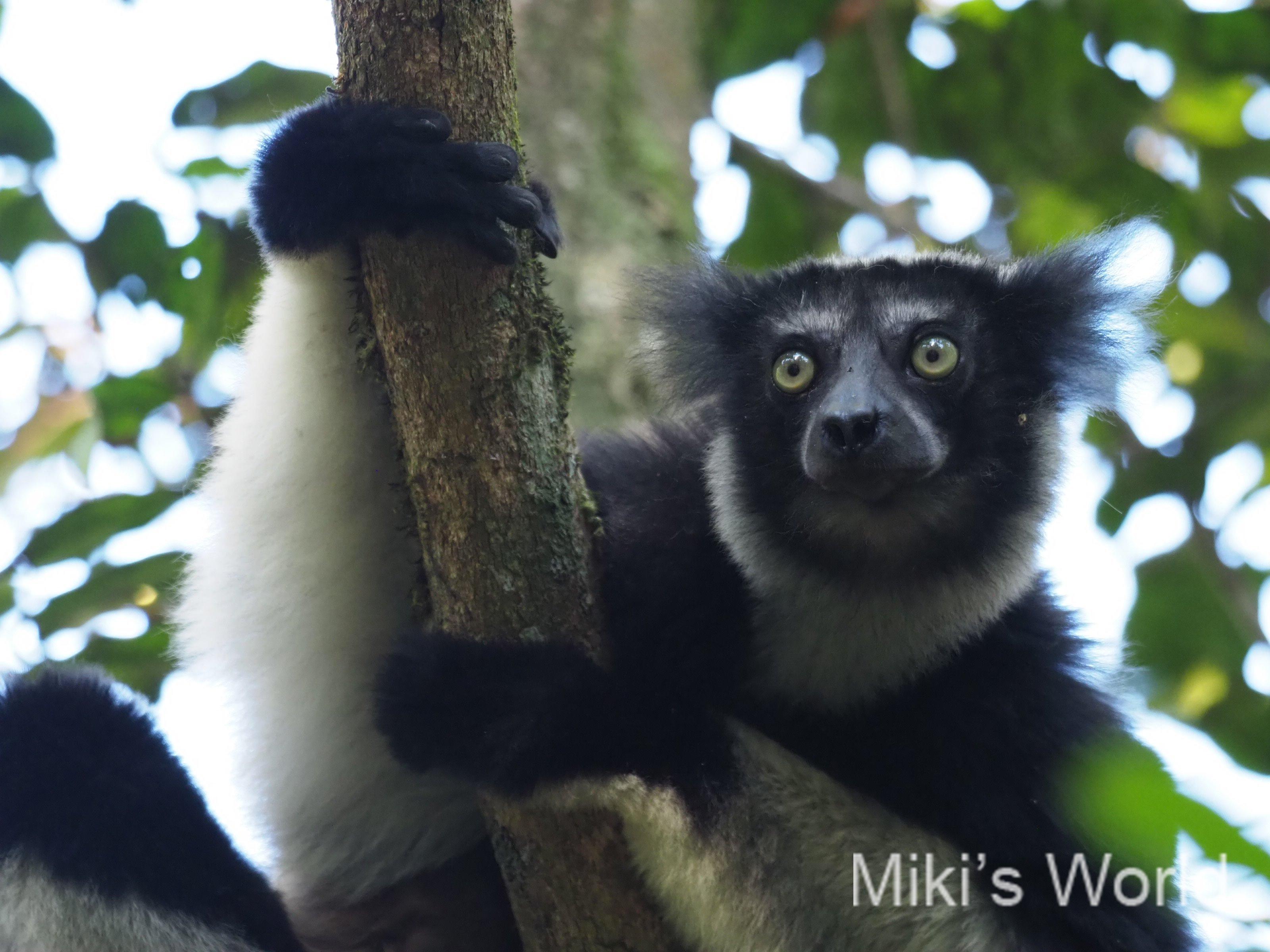 マダガスカルの出入国 相変わらずのカオスか?