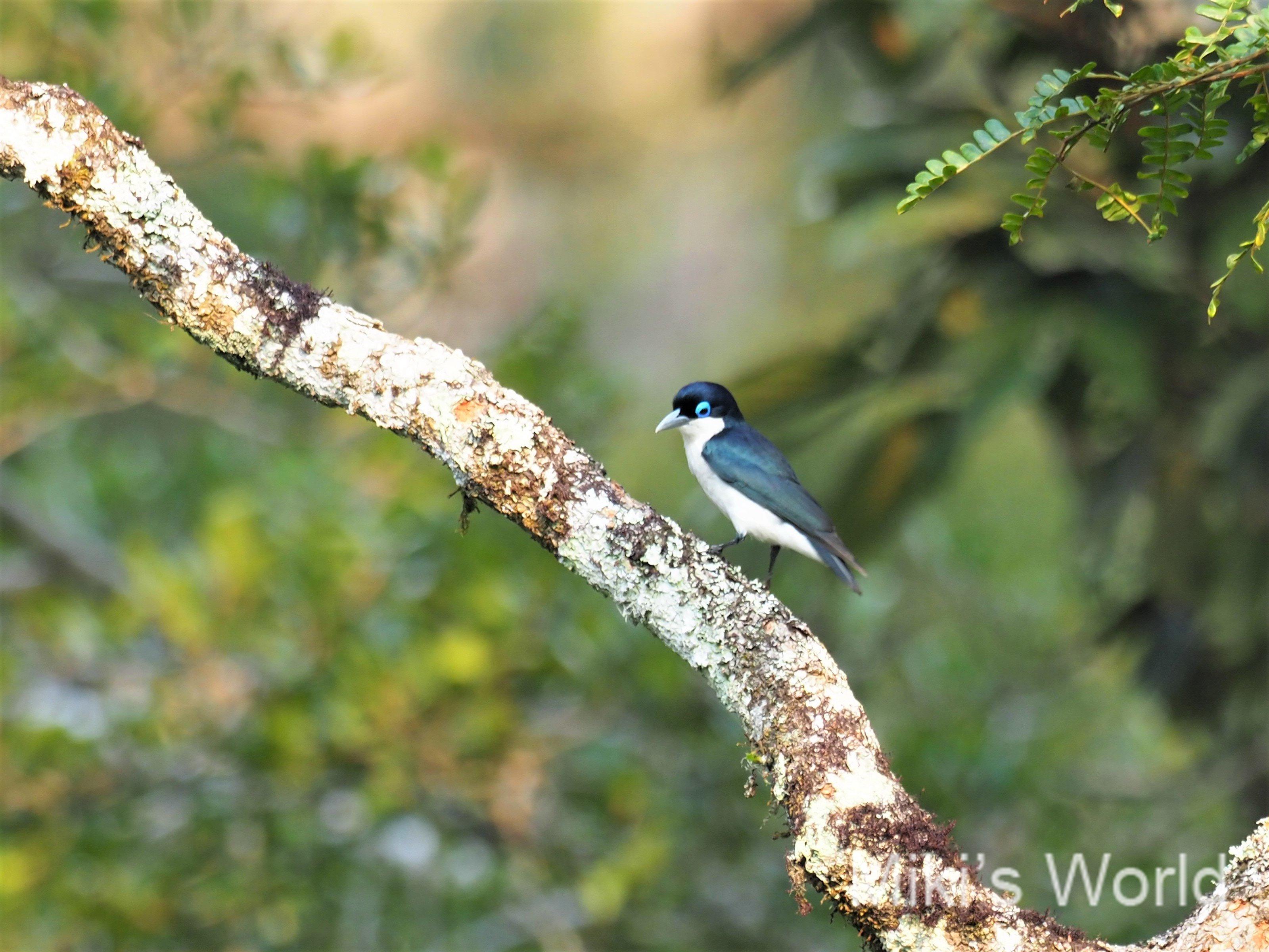 マダガスカルでの自然観察の極意