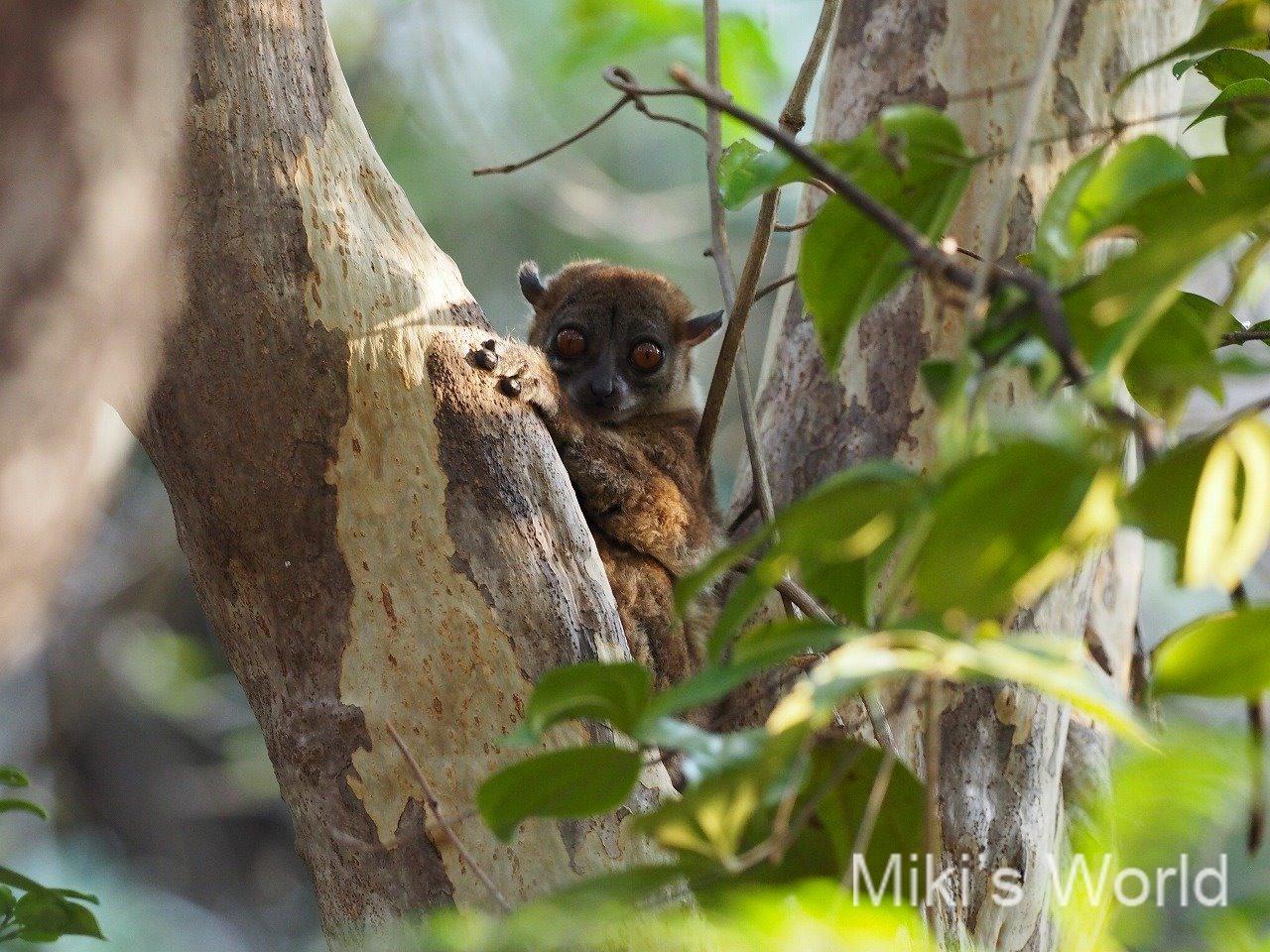 写真集 マダガスカルの自然 旅をするのは大変だけど魅力あふれる動植物