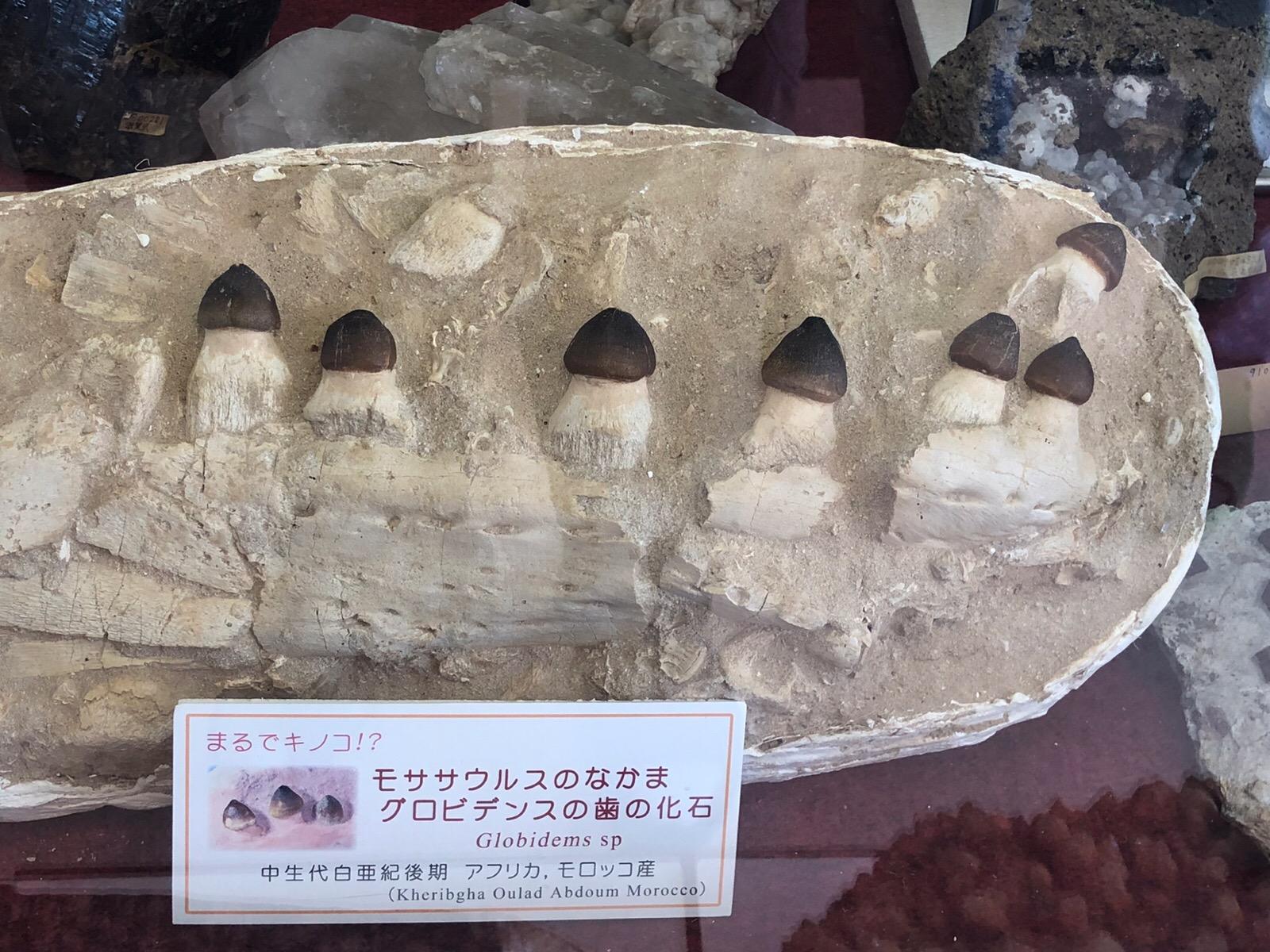 京都 益富地学会館  1年半越しでやっと訪れ気づいたこと