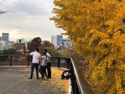 銀座の街路樹がカツラへ 黄葉時期に甘い香ばしい匂いがしたら、それはカツラからです