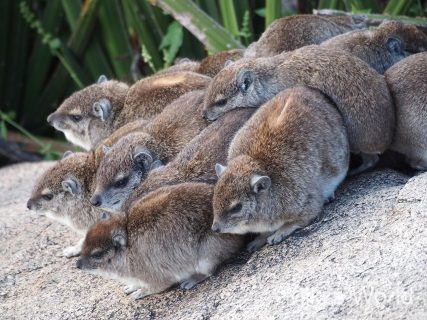 きままに写真集 タンザニアの哺乳類