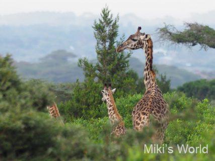 気ままに写真集 タンザニア アルーシャ国立公園