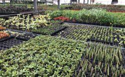 名古屋で観葉植物の世界に触れて、やっぱりプロの説明があると全然違うと気づく