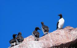 きままに写真集 東部カナダ ニューファンドランド島 その1