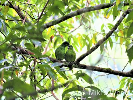 気ままに写真集 ジャマイカの鳥