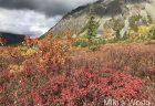 気ままに写真集 秋のアラスカ 食事編