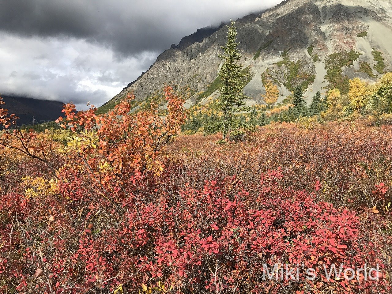 気ままに写真集 秋のアラスカ9月
