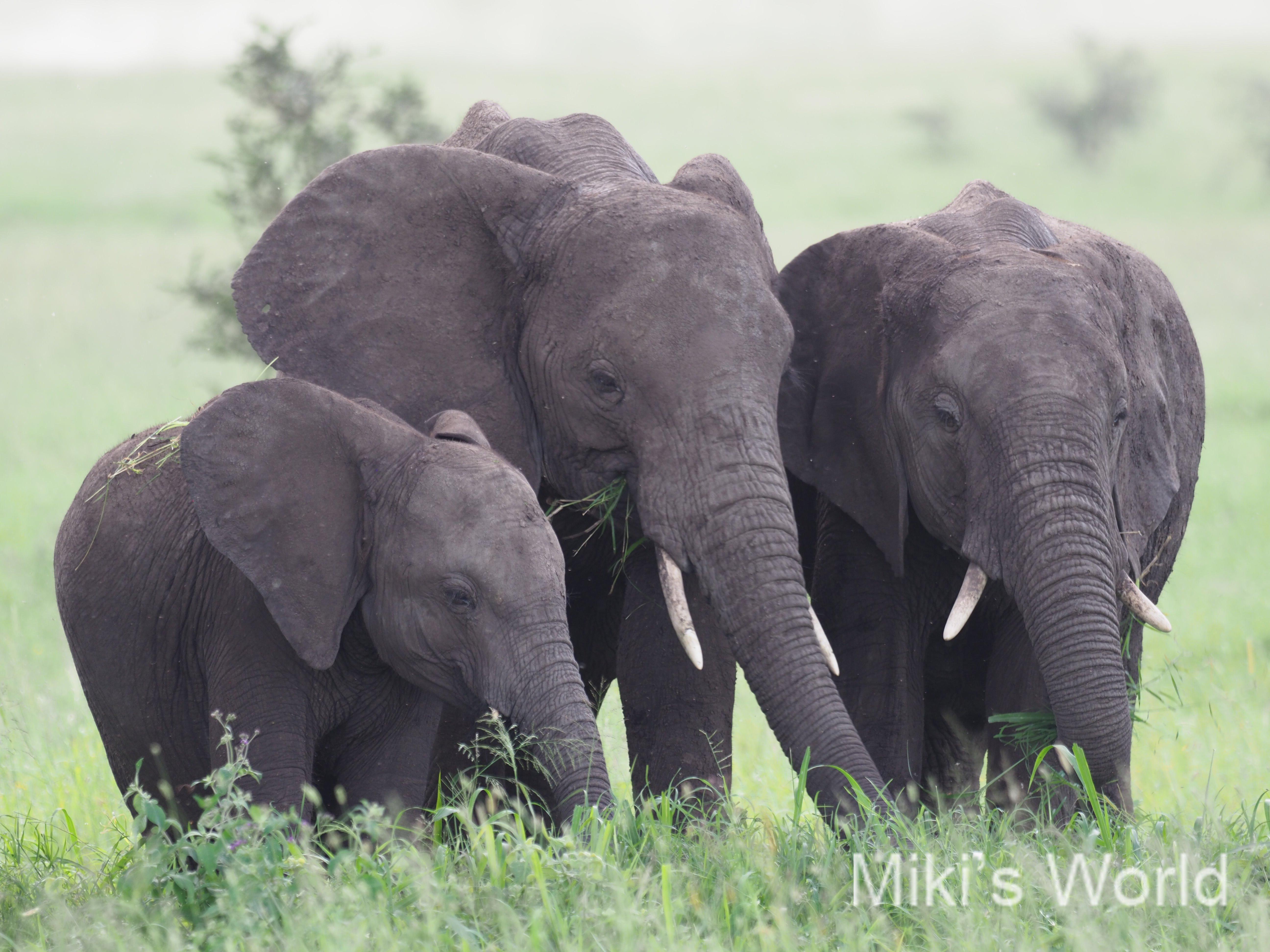 気ままに写真集 タンザニア セレンゲティ国立公園 その1