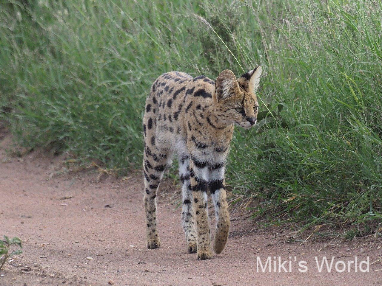 気ままに写真集 タンザニア セレンゲティ国立公園 その2