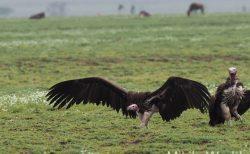 気ままに写真集 タンザニア セレンゲティ国立公園 その3