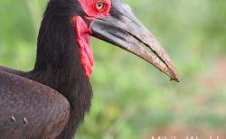 気ままに写真集 タンザニア タランギーレ国立公園