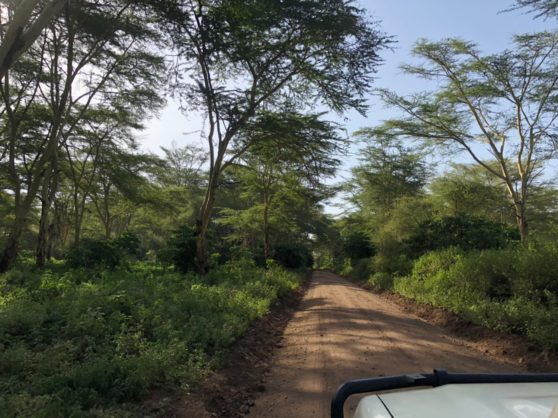 2019年 1月 北部タンザニア( Northern Tanzania) 降雨情報 すでに雨が大量に!