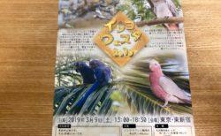 インコフェスタ 2019 3月9日東新宿で開催