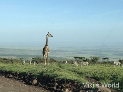 東アフリ・タンザニア サファリ 2019年好きな風景 iPhoneX撮影 その1