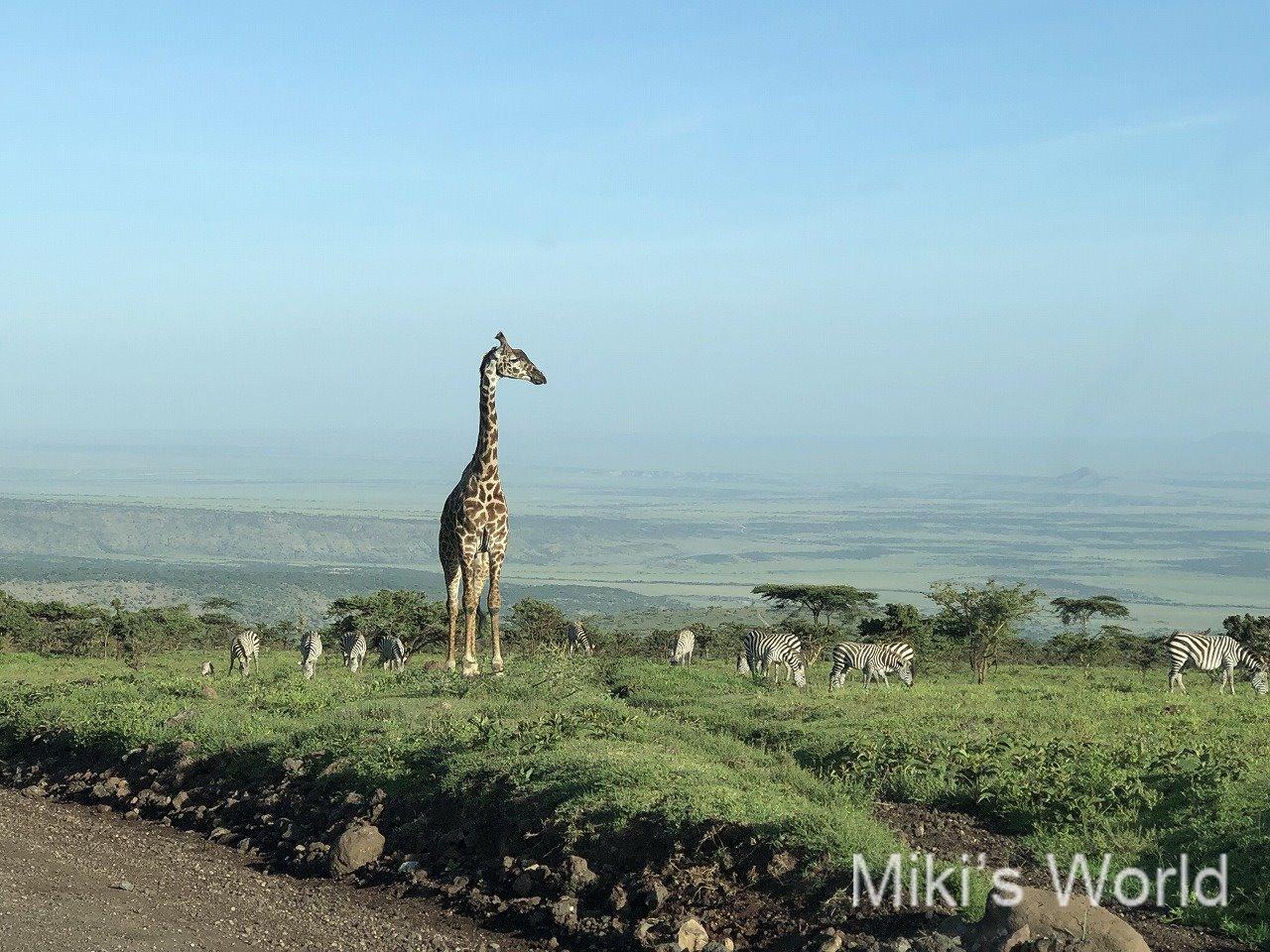 東アフリ・タンザニアEast Africa, Tanzania サファリ 2019年好きな風景 iPhoneX撮影 その1
