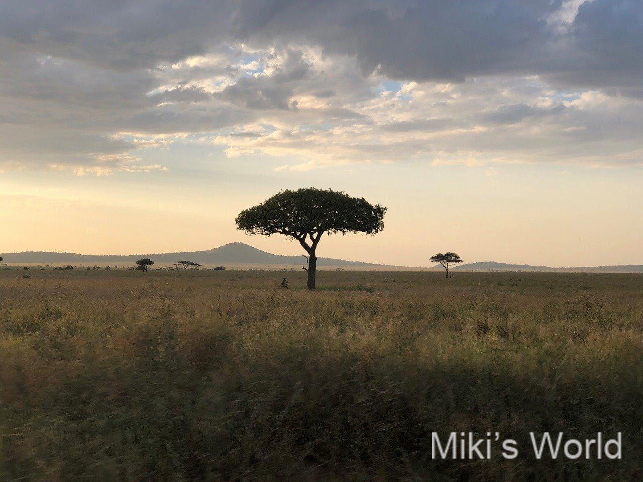 東アフリカ・タンザニア(East Africa, Tanzania) サファリ(safari) 2019年好きな風景 iPhoneX撮影 その2