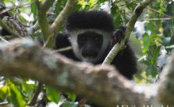 東アフリカ・タンザニア アルーシャ国立公園サファリで見たもの 2019.1.30 Arusha National Park