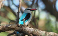 東アフリ・タンザニア タランギレ国立公園での夕方から2時間のサファリ 宿へ急ぎながらも探す Tarangire National Park