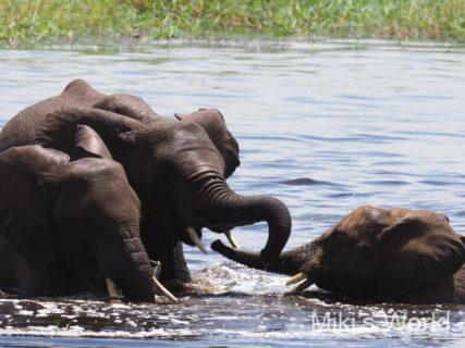 東アフリカ・タンザニアでサファリ2019年1月31日 タランギレ国立公園でゆったりサファリ Tarangire National Park