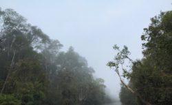 ボルネオ島(Borneo)からおはようございます!