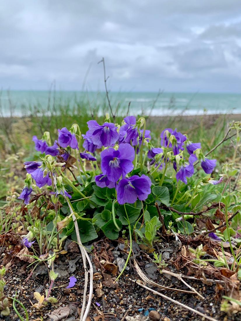 2019年新潟の春の花 今年もたくさんの花に出会えました