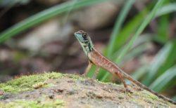 スリランカの爬虫類と・両生類 トカゲ、ヘビ、ヤモリ その2