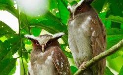 エクアドル・アマゾンの鳥と生き物と景色