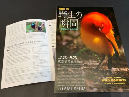 東京都写真美術館 嶋田忠さん写真展 野生の瞬間 9月23日まで パプアニューギニアのフウチョウに出会える