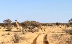 今週末10月27日(日)14:30スタート 自然の旅イベント開催