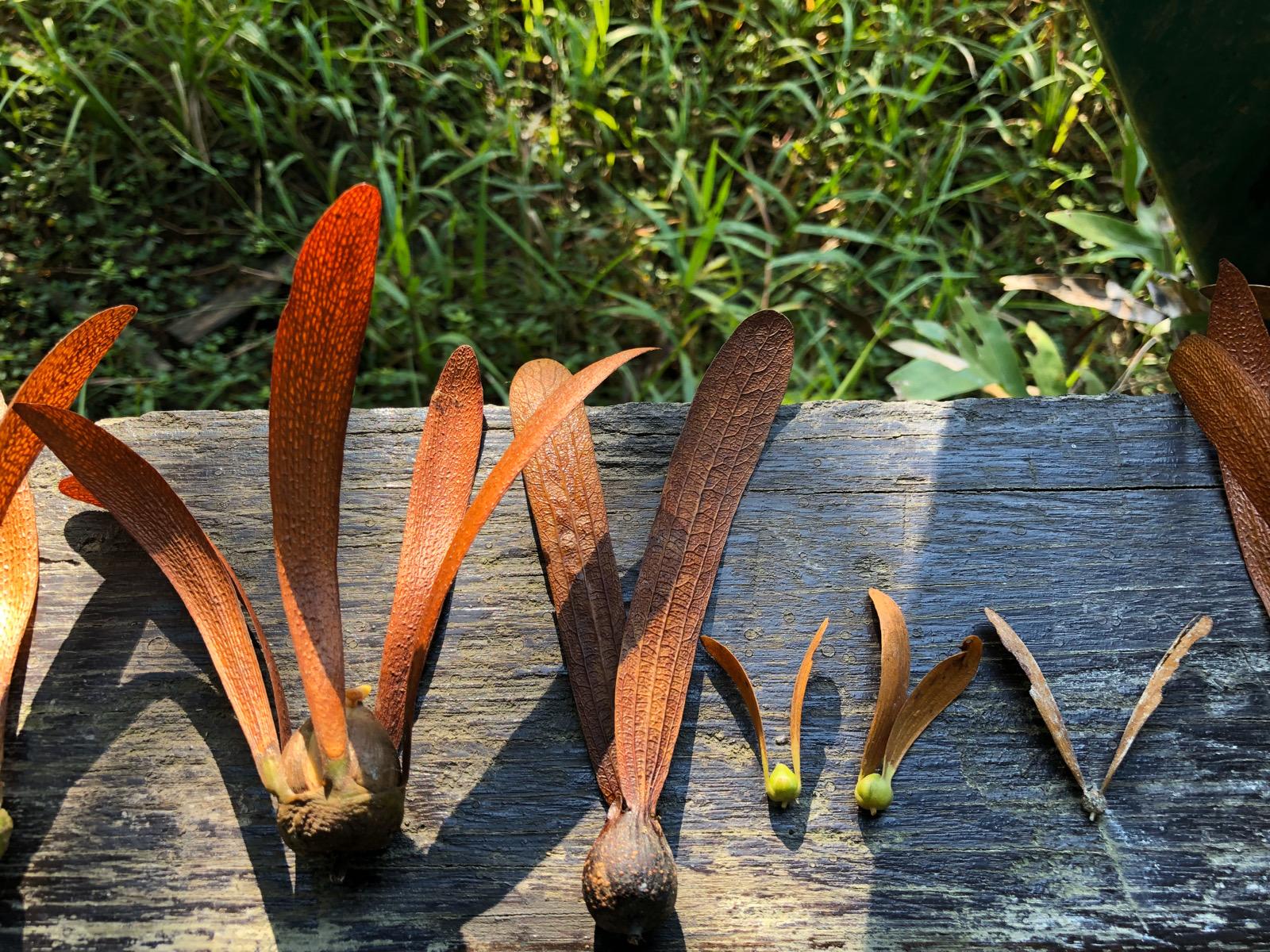 ワイルドライフ「マレーシア ボルネオ島 オランウータン 一斉結実の森に集う」2019年11月4日再放送 AM8 BSプレミアム