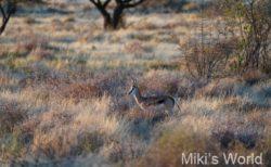 ブログ写真集 南アフリカ・キンバリーの動物たち